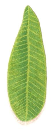 abyss-habidecor-green-leaf-shaped-bath-rugs.jpg